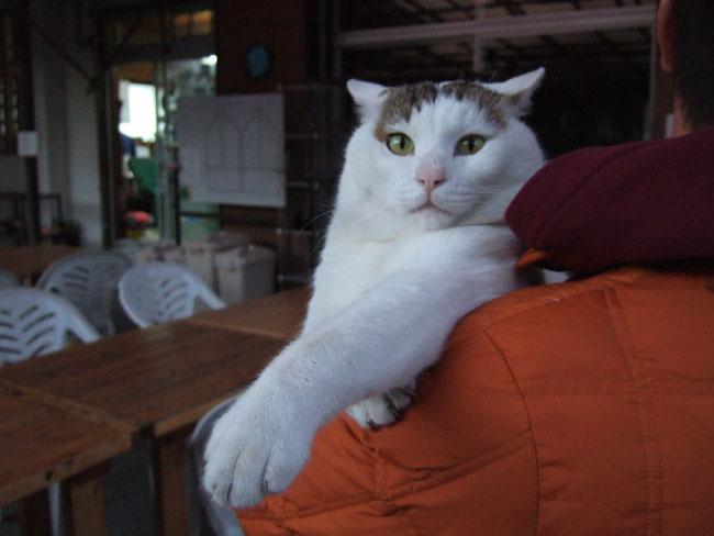 三毛猫エース