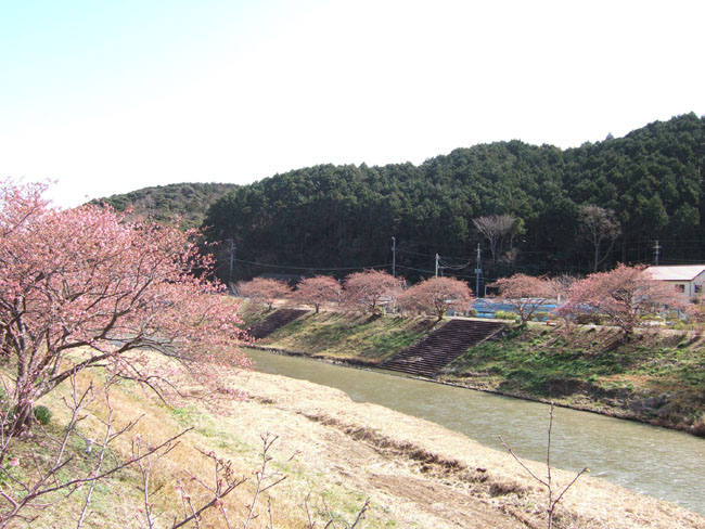 咲き始めました〜。