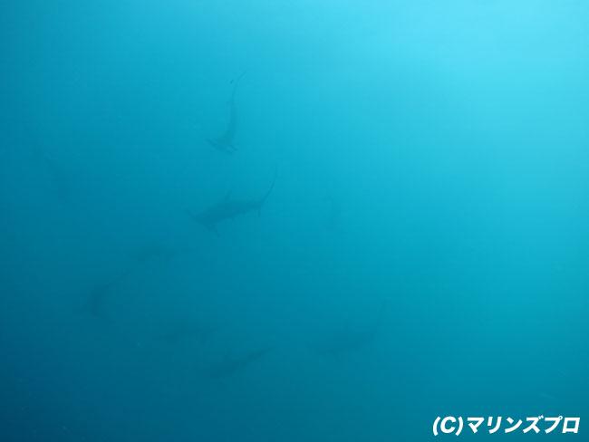 2011.08.23の神子元