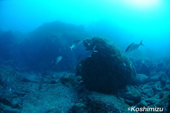2011.12.24の神子元 水温20℃、透視度20m!