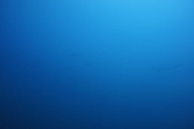 2012.07.26の神子元 黒潮パワー!