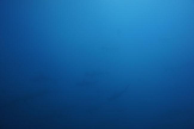 2012.07.31の神子元 台風前に3D!