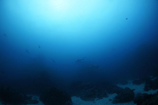 2013.03.31の神子元 陸も海もお盛り上がり(^_^)v