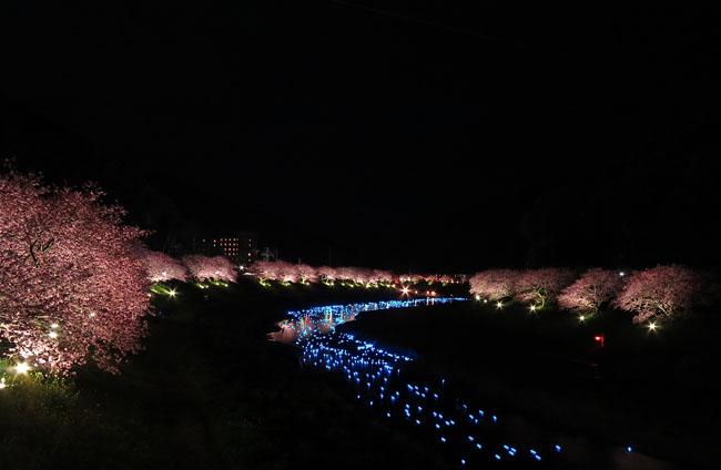 2015・夜桜☆流れ星