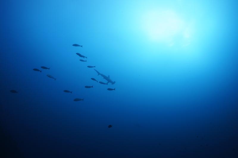 2014.12.27の神子元島 サメ!回遊魚!サンマの群れ(^O^)
