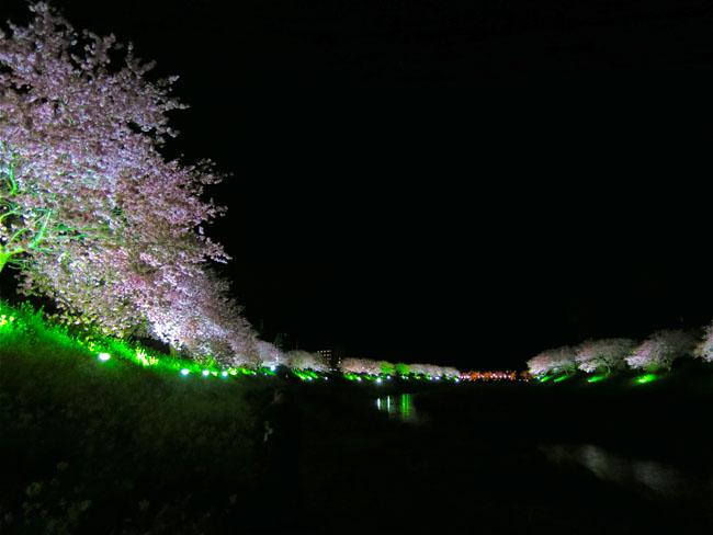 第17回みなみの桜と菜の花まつり