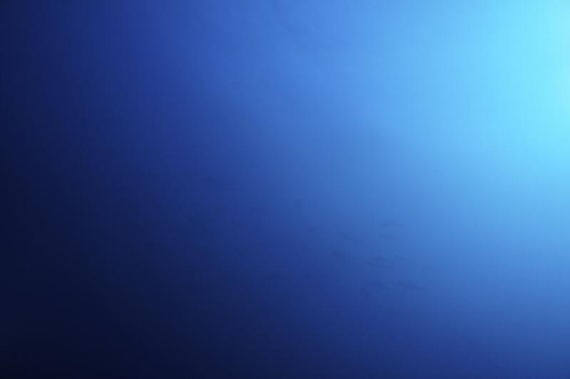2015.12.28の神子元 ハンマーの群れ(^_^)v