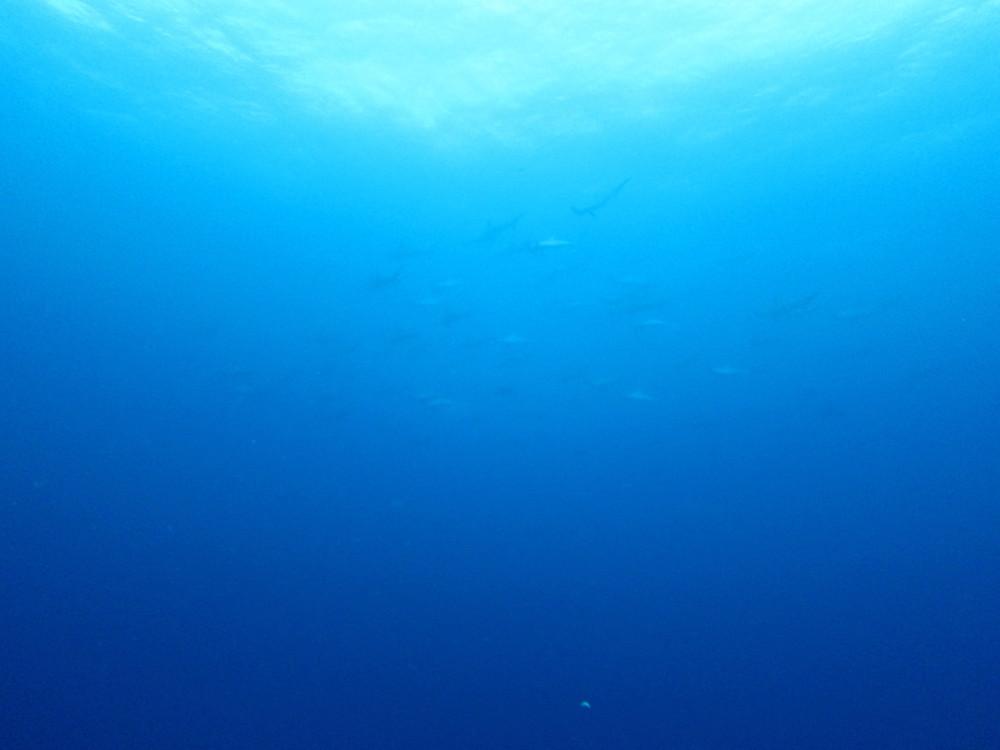 2016.10.17の神子元島 青い海続いていますー!ハンマーもいました!!