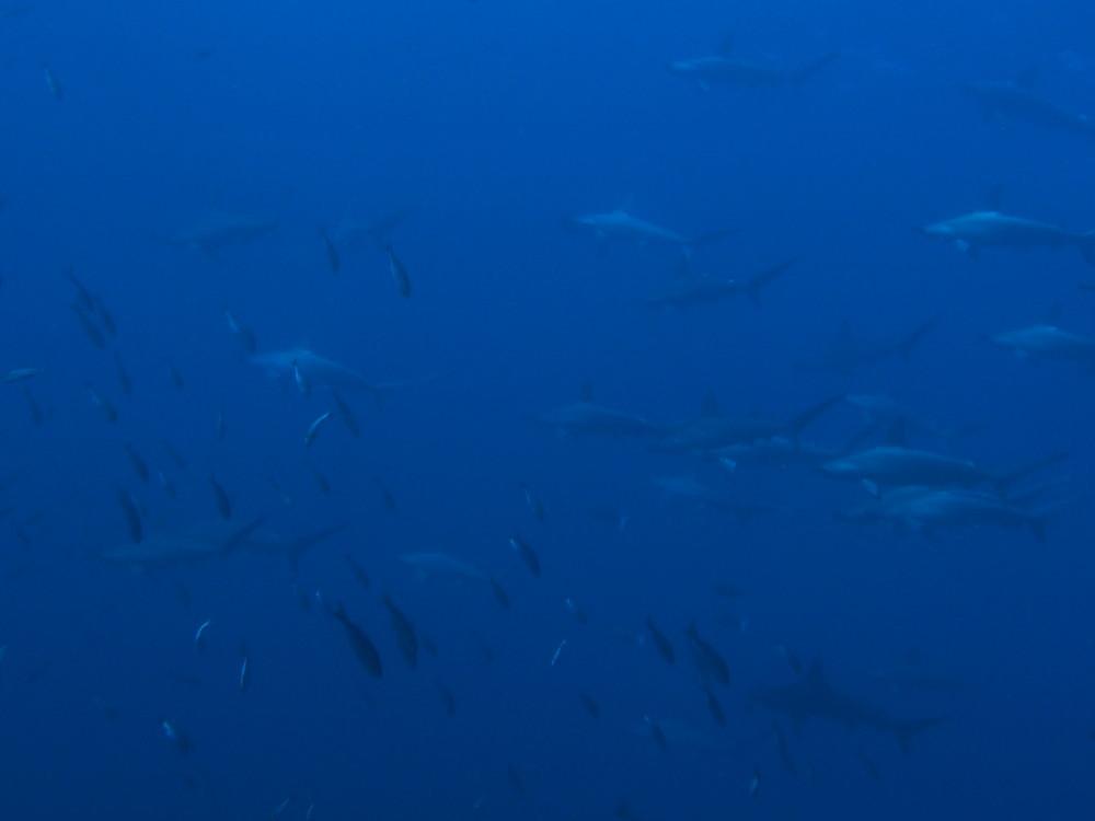 2016.10.18の神子元島 良い海が続いています。