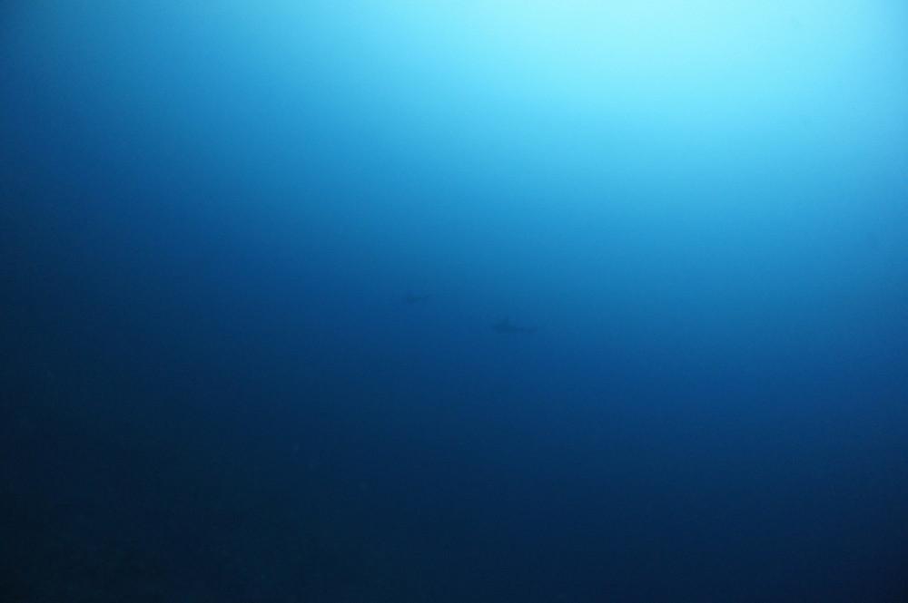 2016.11.01の神子元島 水温&透視度アップでハンマー!