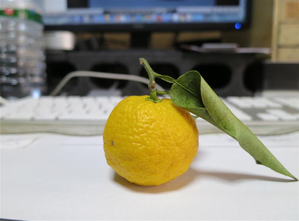 柚子頂きました@冬至