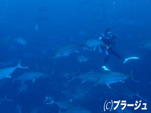 2017.03.11の神子元島 サービスデー(^O^)