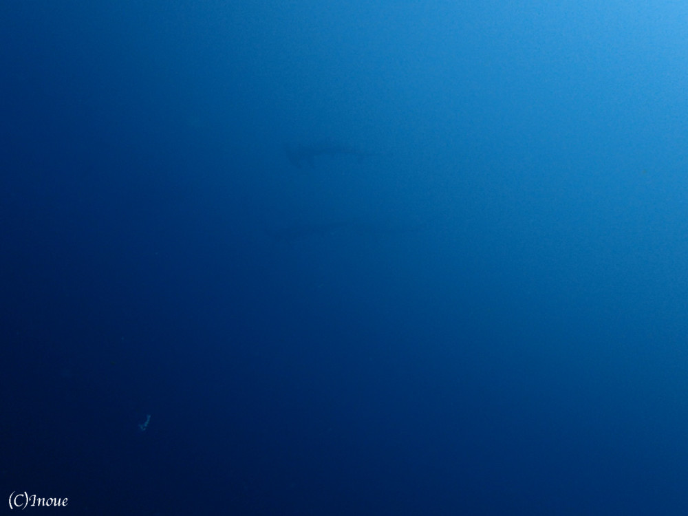 2017.08.12の神子元島 北東が吹きましたが今日も4航海!!