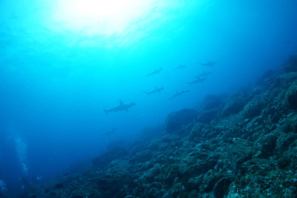 2018.08.29の神子元島 賑やかな海です!