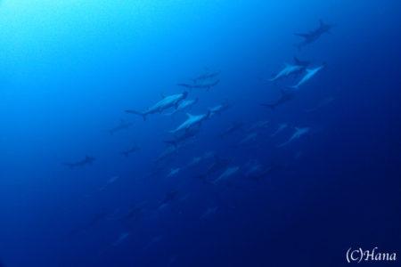 2018.10.24の神子元島 秋のサメ祭♪♪