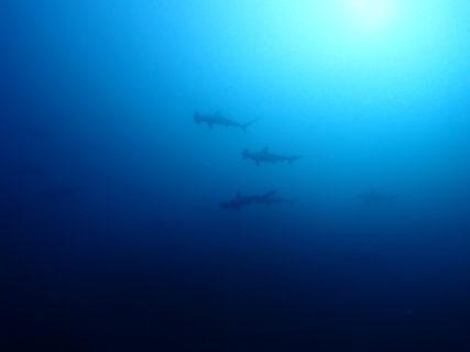 2018.11.11の神子元島 魚群にサメ(^^)♪