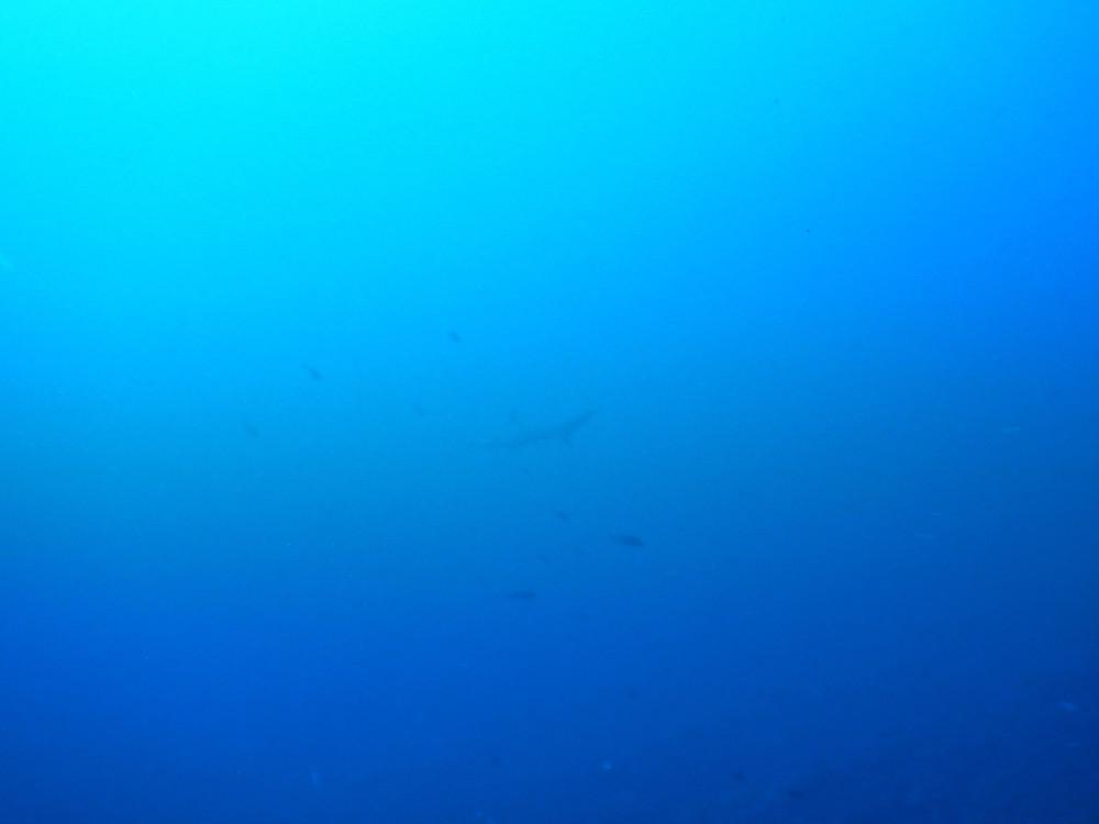 2018.12.02の神子元島 水温21℃!魚影濃し!