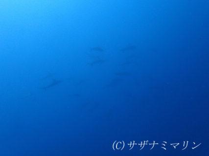 2019.05.23の神子元島 ベタ凪!