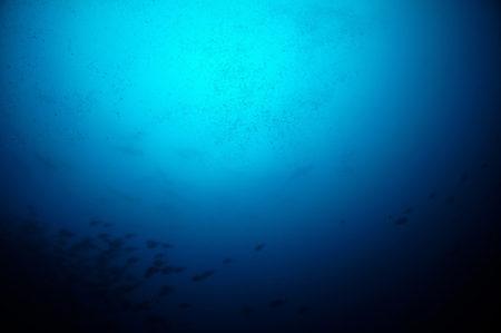 2019.07.26の神子元島 透視度が…。