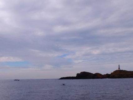 2019.12.26の神子元島 ザトウクジラ!