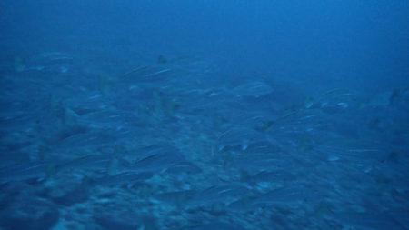 2020.03.14の神子元島 楽しい海です!潜りましょう!!!