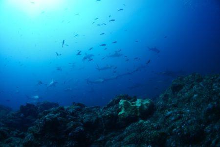 2020.09.15の神子元島 今日も良い海でした!