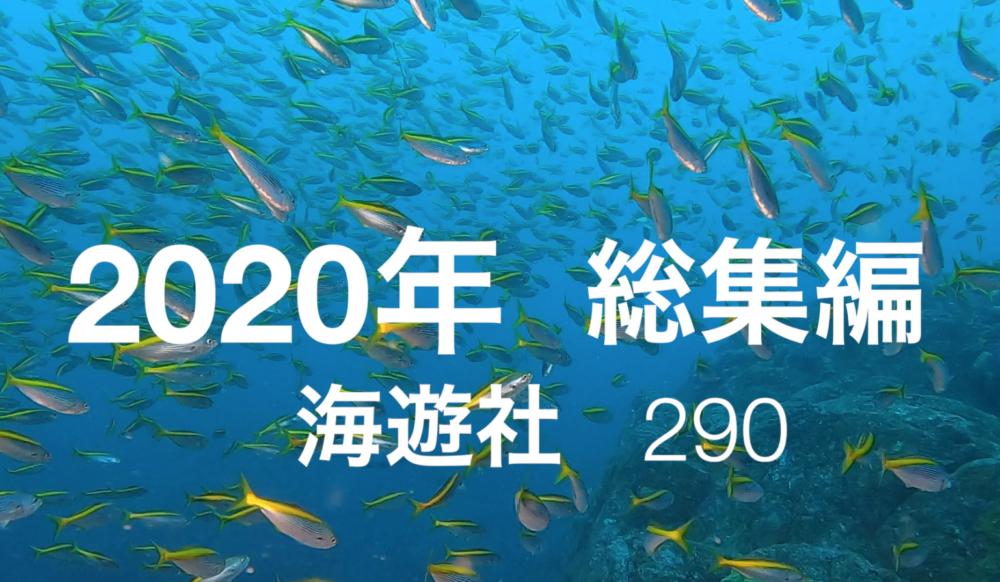 2020年神子元島水中動画総集編! 海遊社 290
