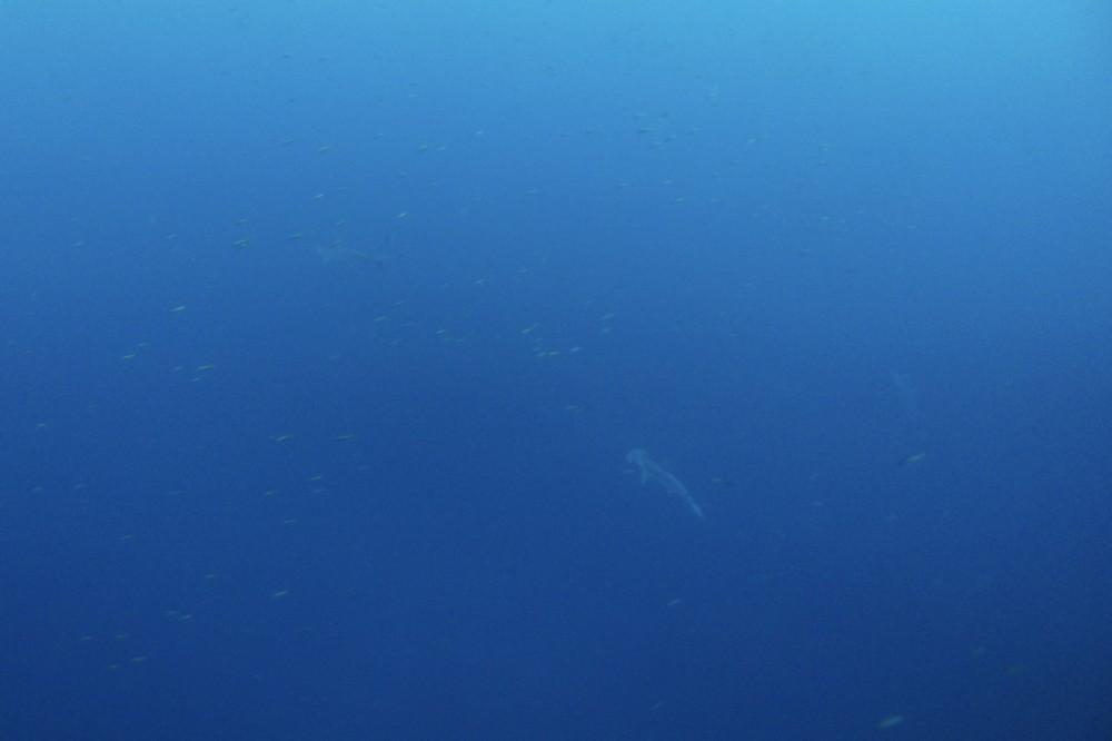 2020.12.06の神子元島 青い&ダイビング日和!