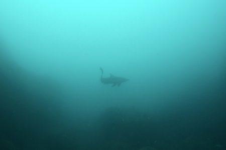 2021.05.03の神子元島 透視度が😅