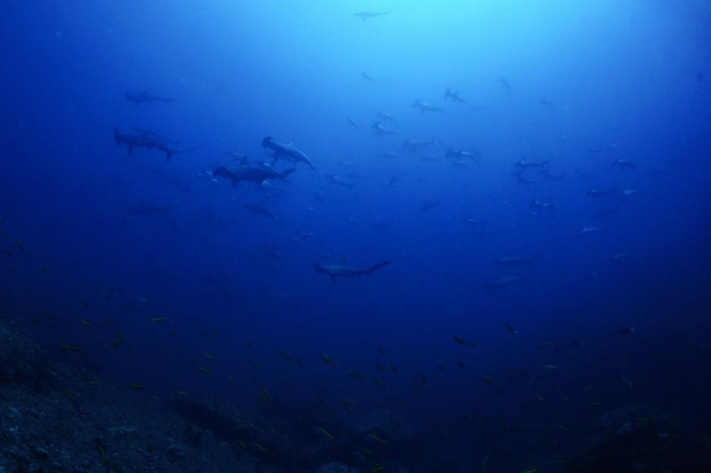2021.07.19の神子元島 好調な海が続いてます!